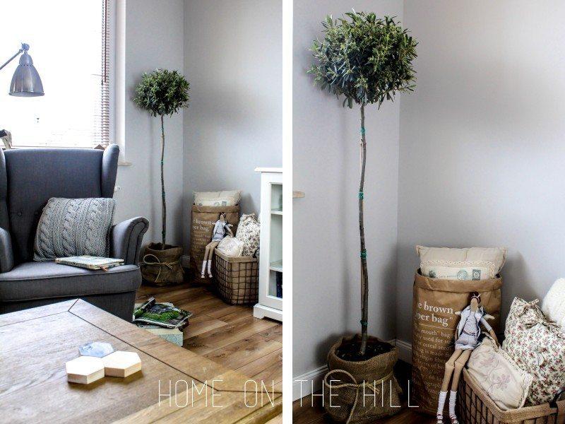 drzewo-oliwne-w-mieszkaniu-1