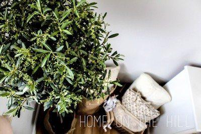 DIY osłonka na doniczkę, drzewko oliwne