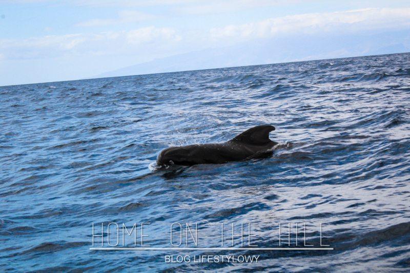 wieloryb teneryfa