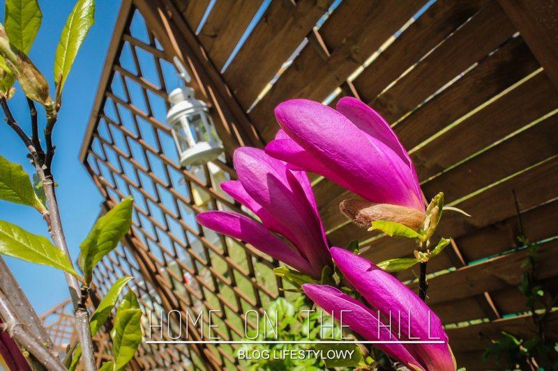 magnolia suzan