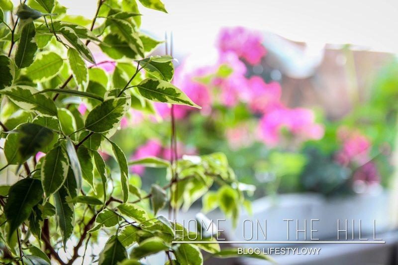 kwiaty-w-domu