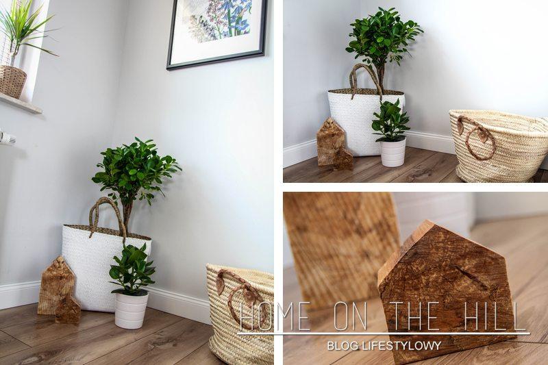 rośliny-do-salonu