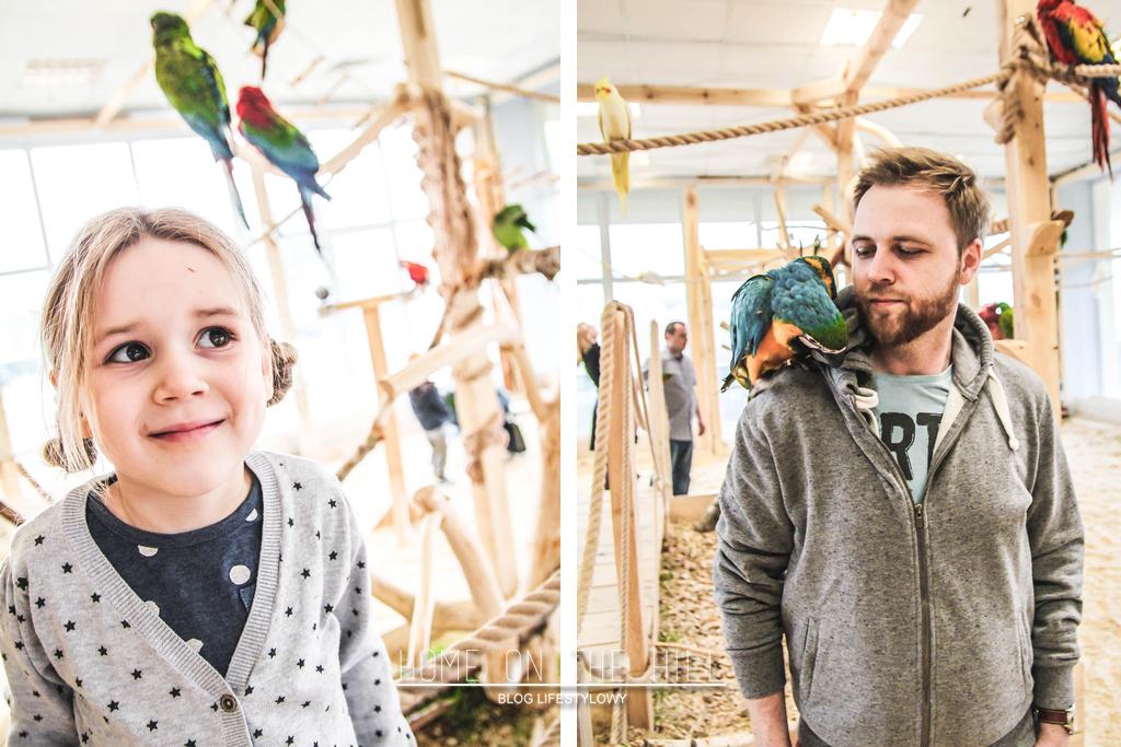 papugi w gdańsku