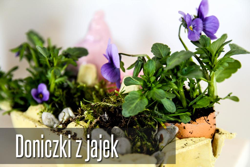 doniczki-ze-skorupek-diy