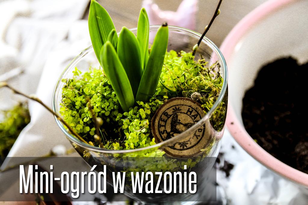 ogród w wazonie