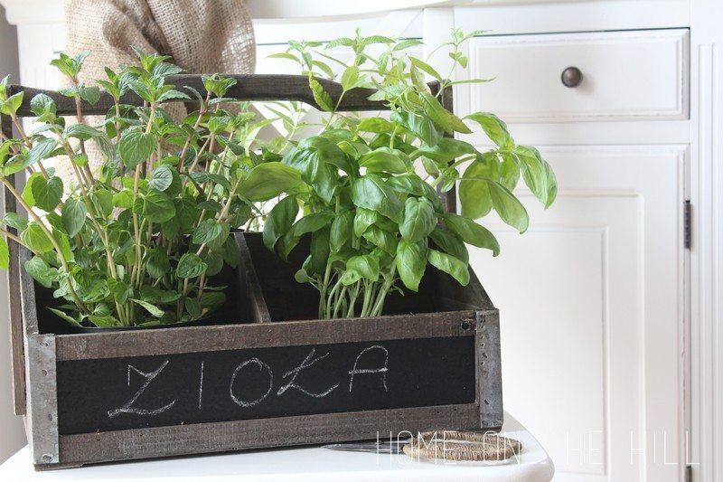 pomysły na ziołowy ogródek na paprapecie