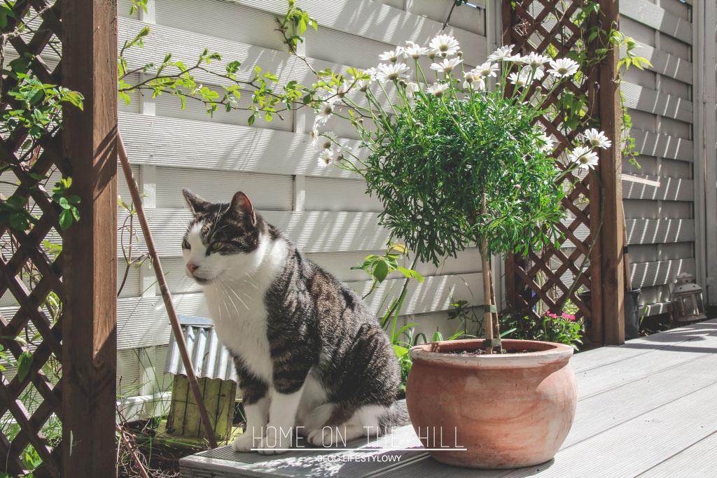 białe pergole w ogródku