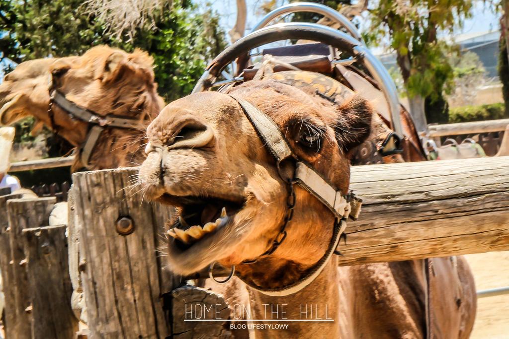 camel-park-cyprus
