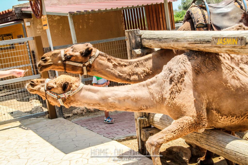 camel-park