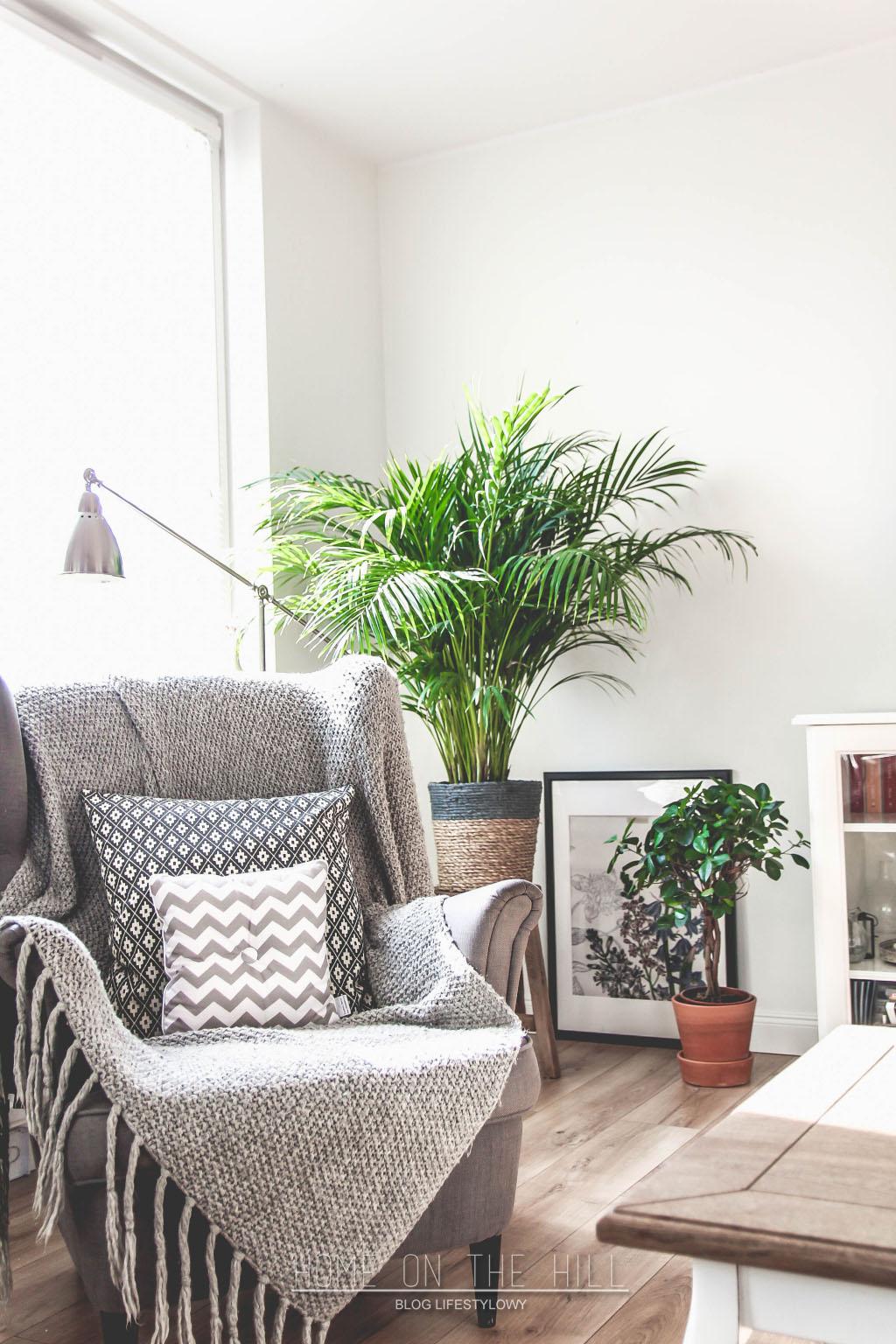 palma-w-mieszkaniu