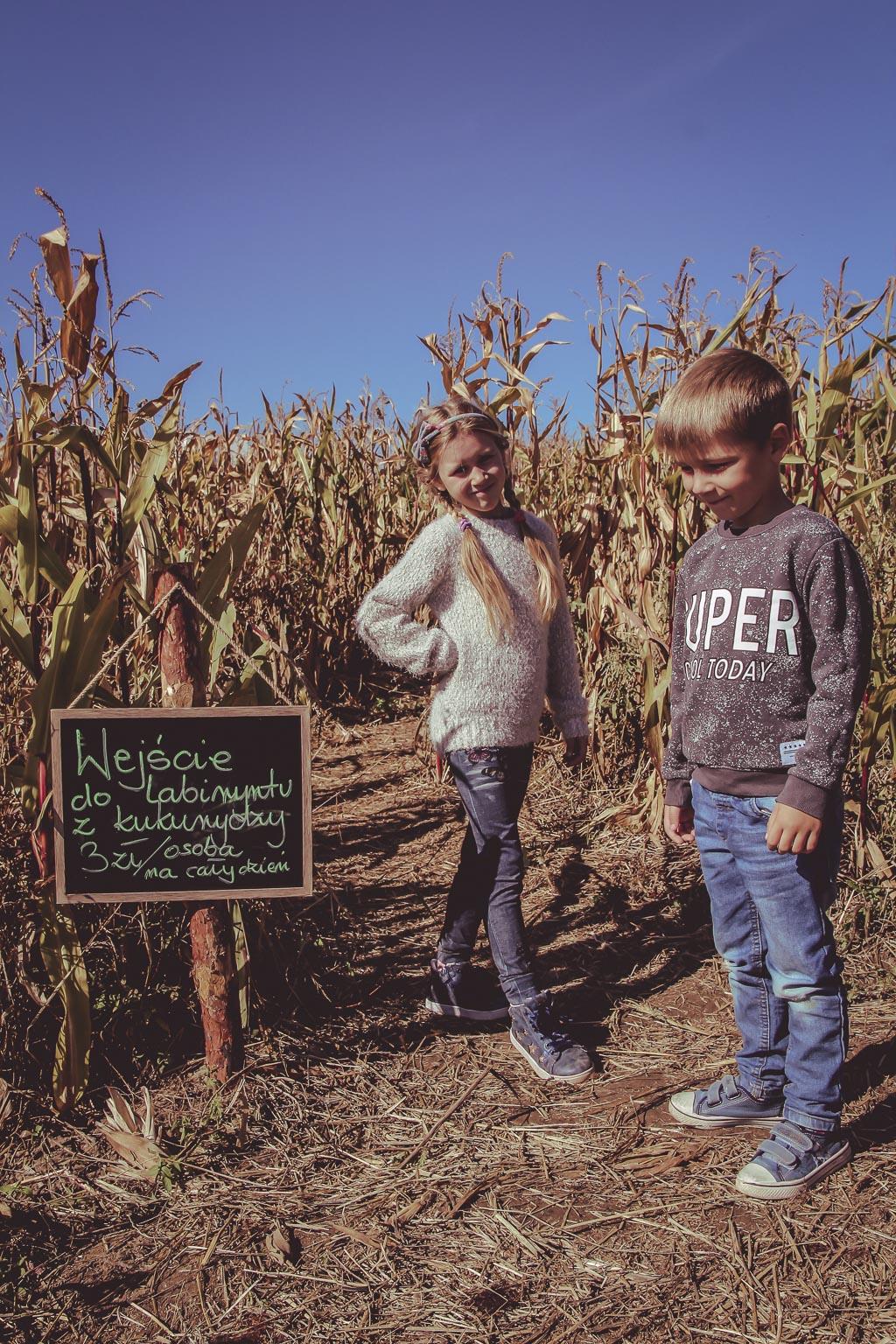 labirynt-w-polu-kukurydzy