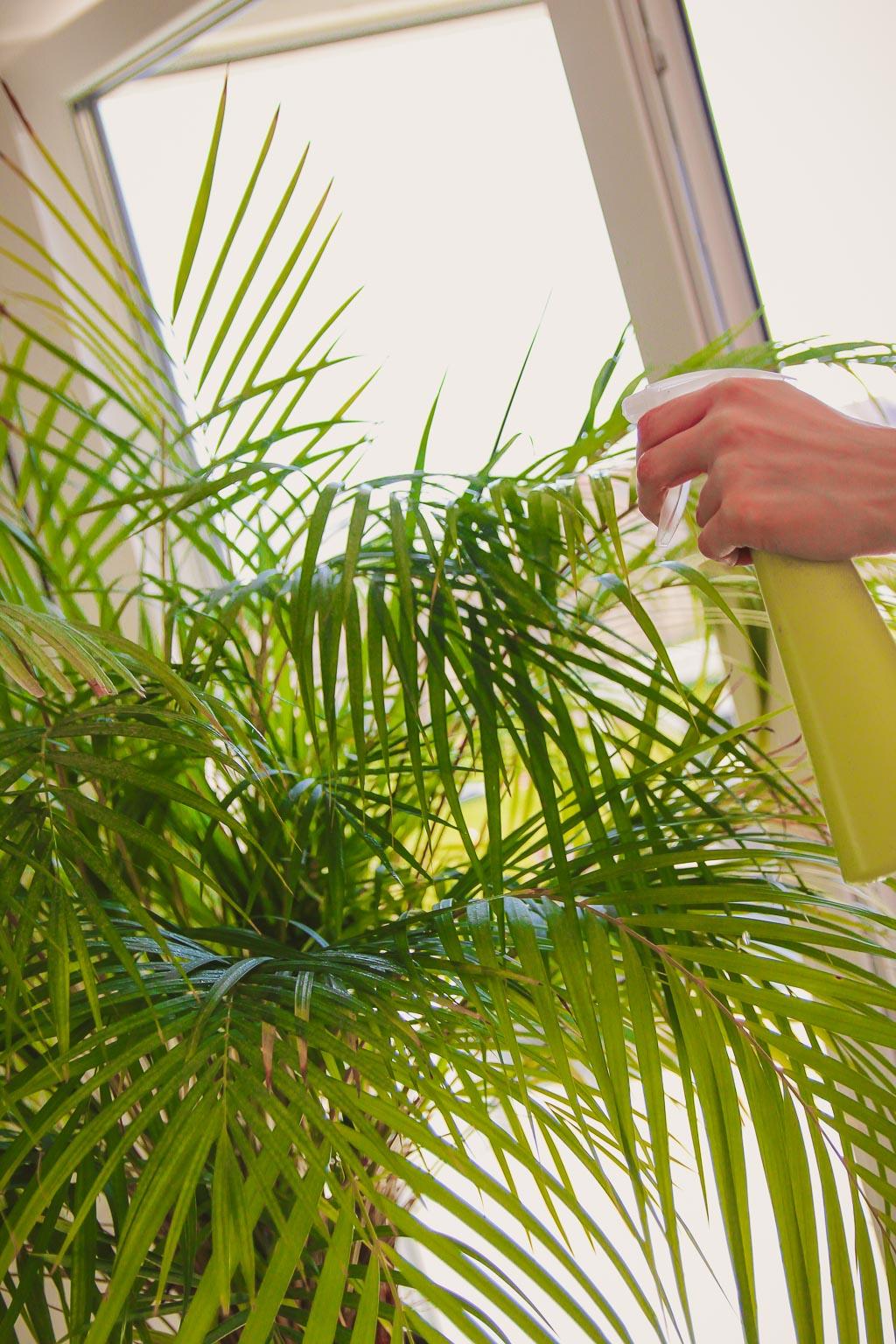 Wilgotność powietrza a rośliny doniczkowe