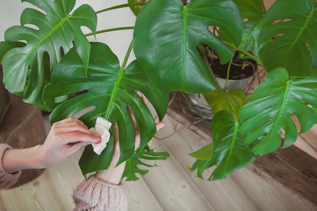 jak dbać o rośliny domowe