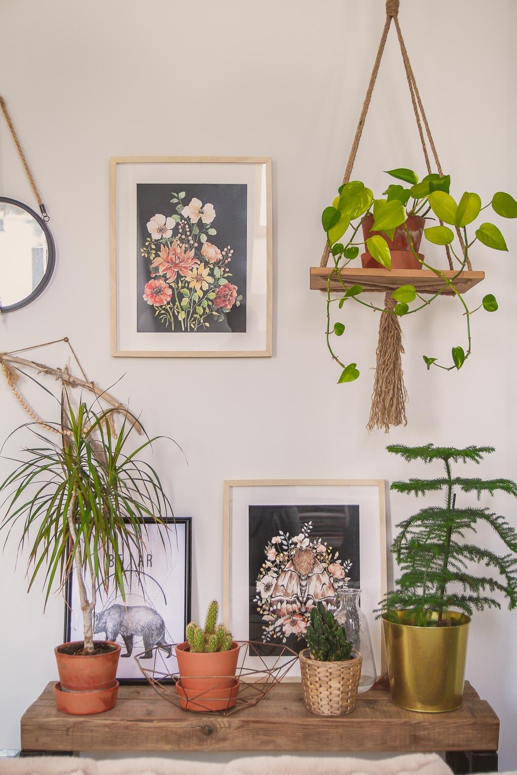 Jak dbać o rośliny domowe, aby pięknie rosły?