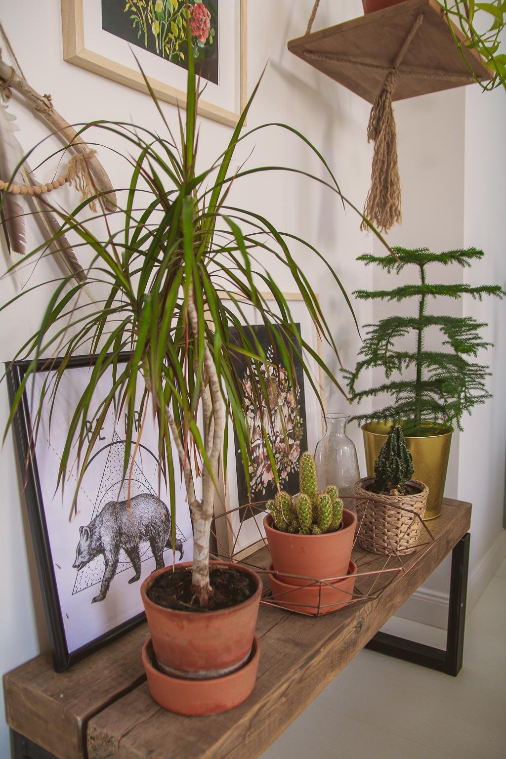 rośliny domowe pielęgnacja