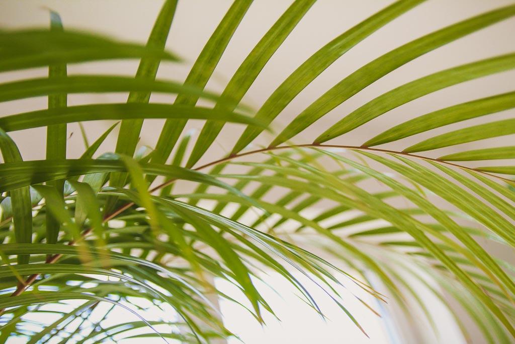 Jakie światło jest najlepsze dla roślin doniczkowych