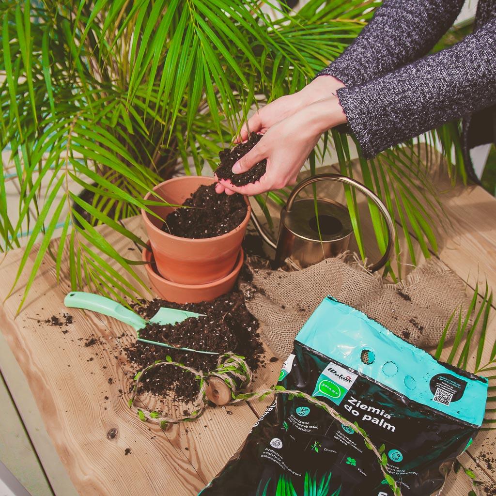 jak wybrać ziemię do roślin doniczkowych