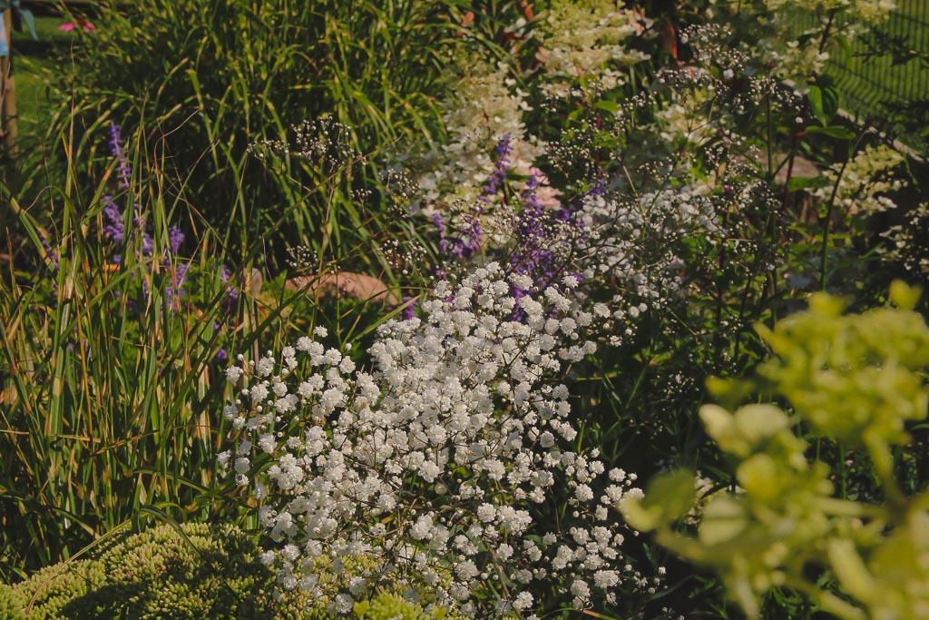 Rośliny idealne dla początkujących ogrodników
