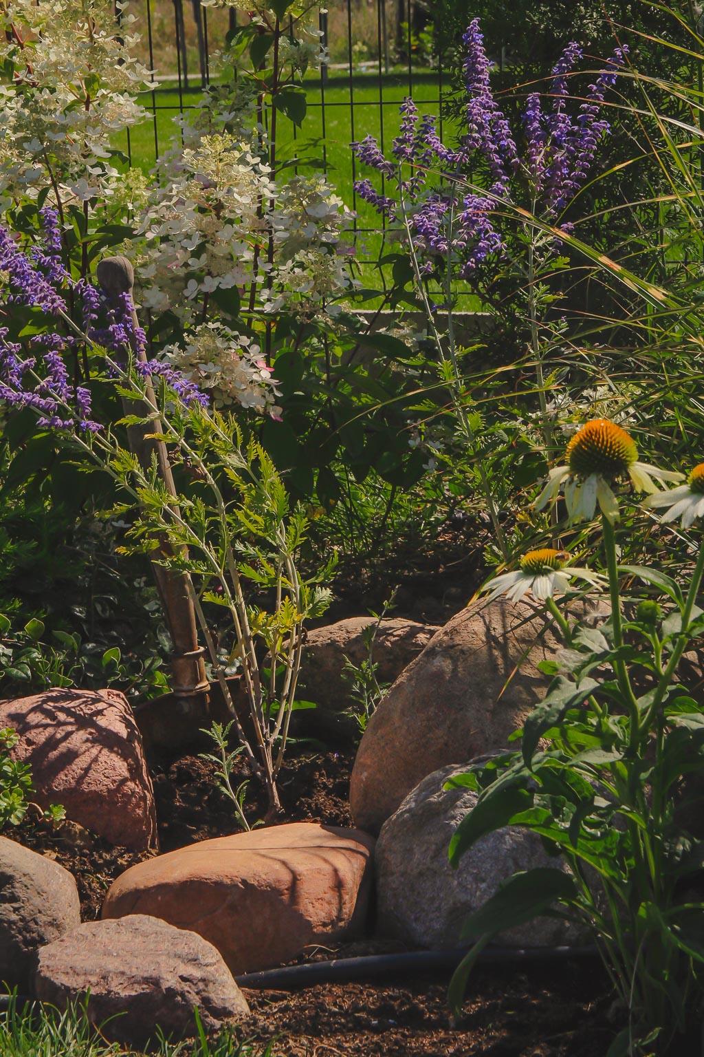 Hortensje, trawy i byliny