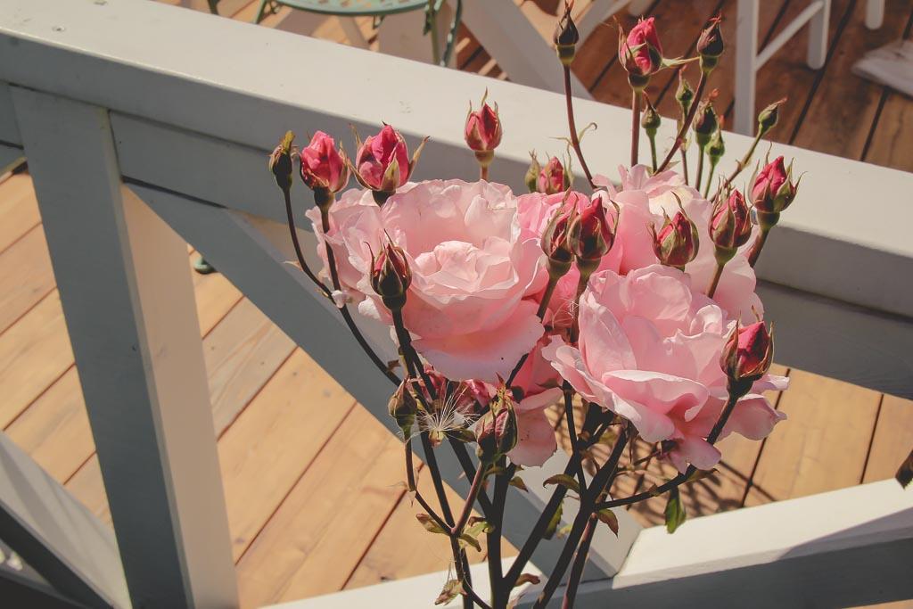 Róża Qeen Elizabeth wielokwiatowa