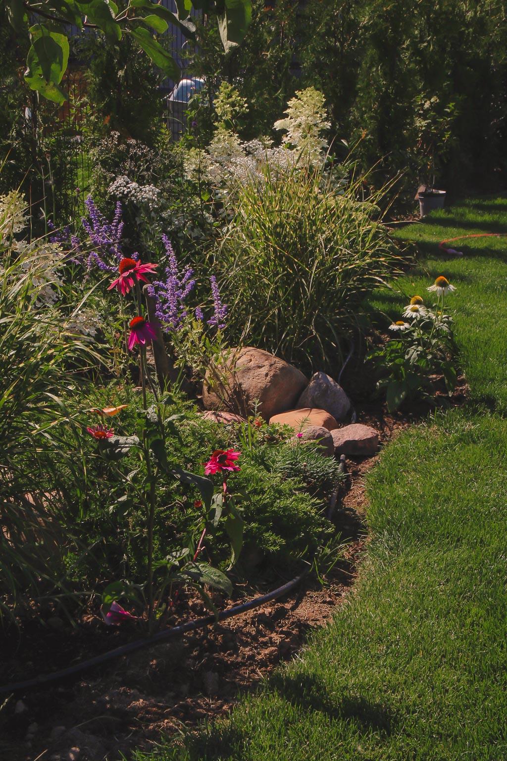 mały ogród projekt